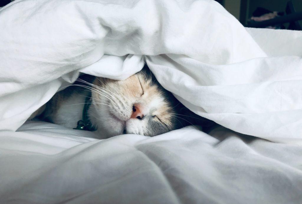 handigste kattenproducten